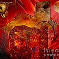 House 0589 Marucii by Marek Lutek