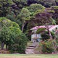 House And Garden Waitamgi by Linda Phelps