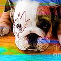 House Broken Bulldog Puppy by Marvin Blaine