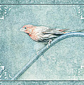 House Finch With Colored Sketch Effect by Debbie Portwood