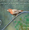 House Finch With Verse by Debbie Portwood