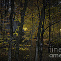 House In The Woods by Michele Steffey