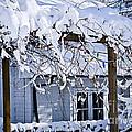 House Under Snow by Elena Elisseeva
