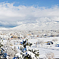 Houses And Trees Covered With Snow by Panoramic Images