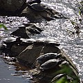 How Many Turtles by Christopher Plummer