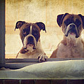 How Much Is That Doggie In The Window? by Stephanie McDowell