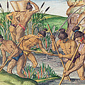 How The Indians Collect Gold From The Streams by Jacques Le Moyne