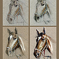 How To Draw A Horse Portrait by Daliana Pacuraru