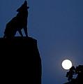 Howl by Diane Bohna