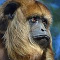 Howler Monkey by Savannah Gibbs