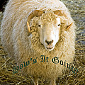 Hows It Going Old English Hunter Green by LeeAnn McLaneGoetz McLaneGoetzStudioLLCcom