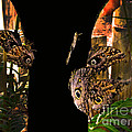 Huge Butterflies In Mindo by Al Bourassa