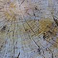 Huge Stump by Robert Storost