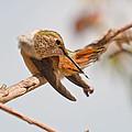 Huimmingbird 5 by Kim  Rollins    Pride Imaging Fine Arts