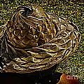 Hula Hats 6 by Charles Davis