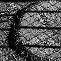 Hula Stump by Angus Hooper Iii