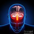 Human Brain by Johan Swanepoel