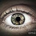 Human Eye Macro by Elena Elisseeva