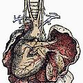 Human Heart, 1543 by Granger