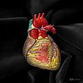 Human Heart On Black Velvet by Serge Averbukh