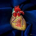 Human Heart On Blue Velvet by Serge Averbukh