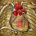 Human Heart Over Vintage Chart Of An Open Chest Cavity by Serge Averbukh