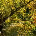 Humber River 5 by Steve Harrington