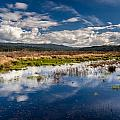 Humboldt Marshes In Spring by Greg Nyquist