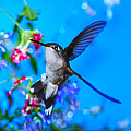 Hummer And Flowers On Acrylic by Randall Branham