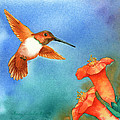 Hummer by Tracy L Teeter