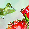 Humming Bird And Cactus Flowers by Bob and Nadine Johnston