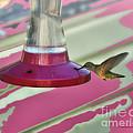 Humming Bird Feeding by Thomas Woolworth