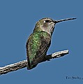 Humming Bird On A Stick by Tom Janca