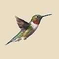 Humming Bird by Paul Freidlund