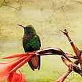 Hummingbird 1 by Teresa Zieba