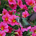 Hummingbird 3219 by Jack Schultz