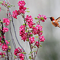 Hummingbird And Flowers by Peggy Collins