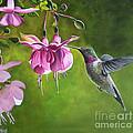 Hummingbird And Fuschia by Debbie Hart