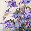 Hummingbird And Purple Columbine by Janet Zeh