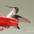 Hummingbird At The Feeder by Lori Tordsen