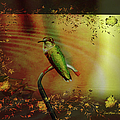 Hummingbird At The Pond by Ericamaxine Price