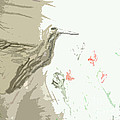 Hummingbird by Ayyappa Das
