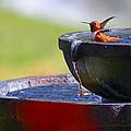 Hummingbird Bath by Lynn Bauer