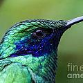 Hummingbird Closeup by Nikki Vig