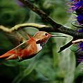 Hummingbird Dreams Digital Art by Ernie Echols