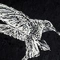Hummingbird by Fabrizio Cassetta