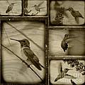 Hummingbird Family Portraits by Carol Groenen