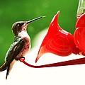 Hummingbird Feeder by Stacey Pollio
