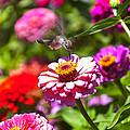 Hummingbird Flight by Garry Gay
