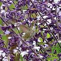 Hummingbird Flowers by Scott Hill